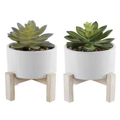 2 Piece Succulent Plant in Pot Set - Wayfair