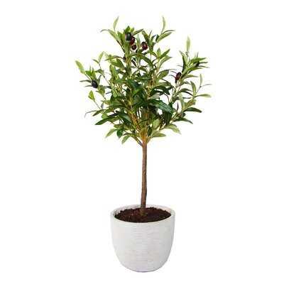 "28"" Olive Tree In 7.25"" Cement Pot,Gray - Wayfair"