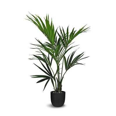 Kentia Floor Palm Plant in Pot - Wayfair