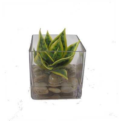 """Faux Plant """"water"""" Desk Top Plant in Terrarium - Wayfair"""
