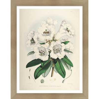 Vintage Botanical II by Julia Kearney Framed Painting Print - Wayfair