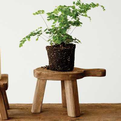 Eastlake Plant Stand - Wayfair
