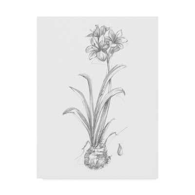 'Botanical Sketch II' Drawing Print on Wrapped Canvas - Wayfair