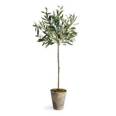Olive Tree in Pot - AllModern