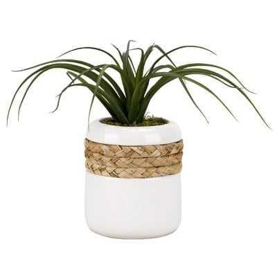 Curly Tillandsia Round Ceramic Floor Foliage Plant in Planter - Wayfair