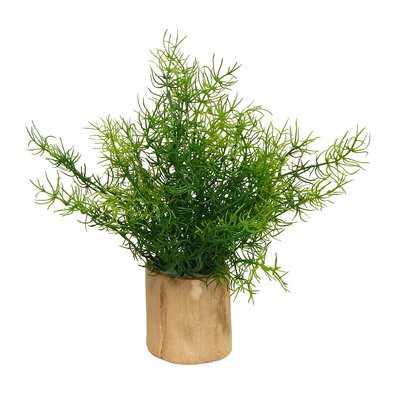 Asparagus Fern Plant in Decorative Vase - Wayfair
