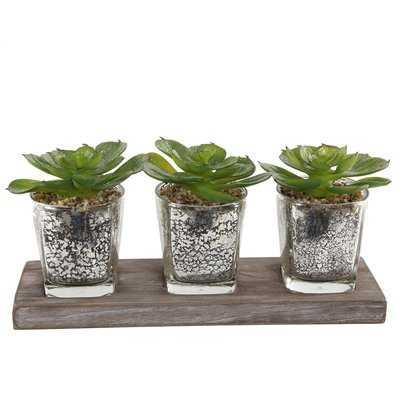 Desktop SucculentPlant in Decorative Vase - Wayfair
