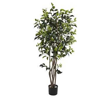 Faux Potted Ficus Bushy Tree - Pottery Barn