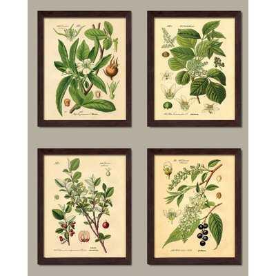 'Popular Old-Fashioned Plant Botanical' 4 Piece Graphic Art Print Set - Wayfair