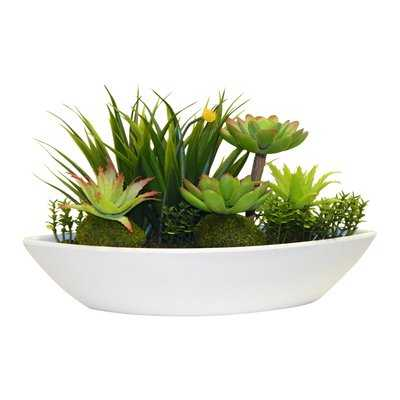 Succulent Plant in Planter - Birch Lane