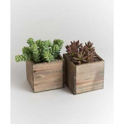 Shop Succulents Urban Living Wood Box Succulents - Home Depot