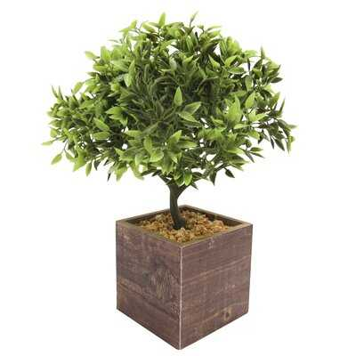 Leaf Bonsai Tree in Pot - Wayfair