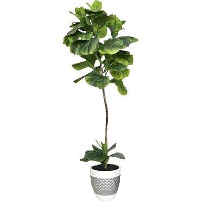 Fiddle-Leaf Fig Floor Palm Tree in Pot - Birch Lane