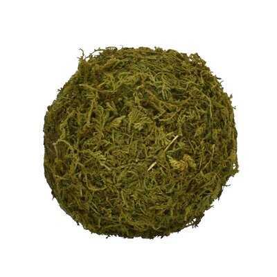 Sphere Moss Topiary (Set of 4) - Wayfair