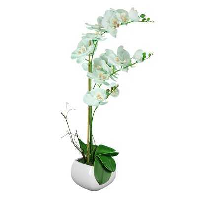 Orchid Flowering Plant in Pot - Wayfair