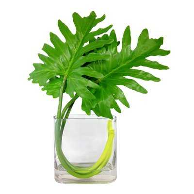 Xanadu Leave Square Desktop Foliage Plant in Vase - Wayfair