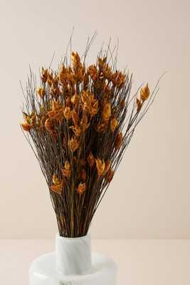 Dried Bell Grass Bouquet - Anthropologie