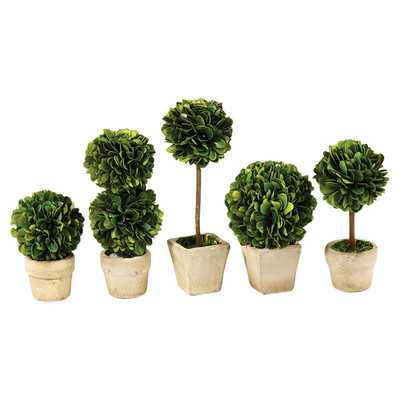 5 Piece Gaudreau Mini Boxwood Topiary in Pot Set - Birch Lane