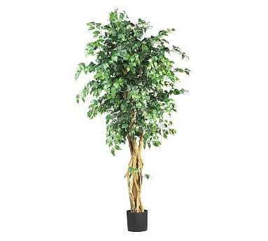 Faux Potted Palace Style Ficus Tree, 6' - Pottery Barn