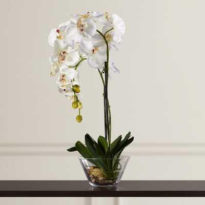 Phalaenopsis Silk Orchid in Glass Vase - AllModern