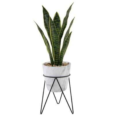 Snake Plant in Planter - Wayfair