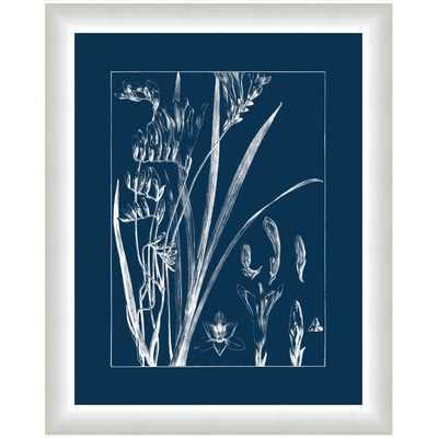 Flora II Framed Graphic Art - Wayfair