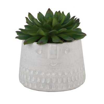 Cylinder Cool Face Desktop Succulent Plant in Decorative Vase - Wayfair
