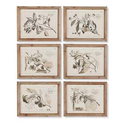 'Fruit Bearing Branch' 6 Piece Picture Frame Painting Set - Birch Lane