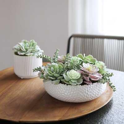 Cactus Succulent in Decorative Vase - Wayfair