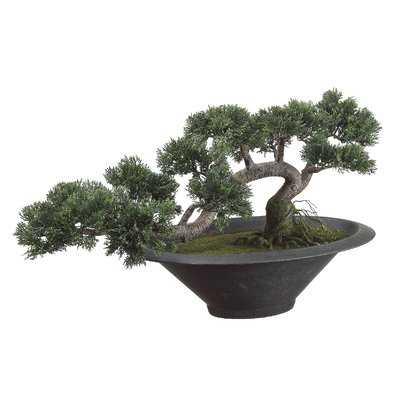 Trailing Cedar Artificial Bonsai Desk Top Plant in Pot - Wayfair