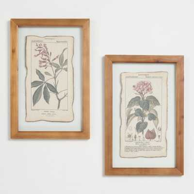 Botanical Prints Framed Linen Wall Art Set of 2 by World Market - World Market/Cost Plus