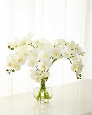 Cream Orchid Phalaenopsis in Glass Cylinder - Horchow
