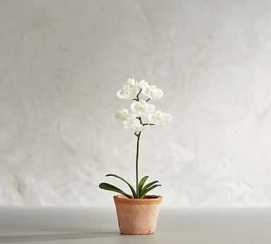 Mini Faux Potted Orchid - Pottery Barn