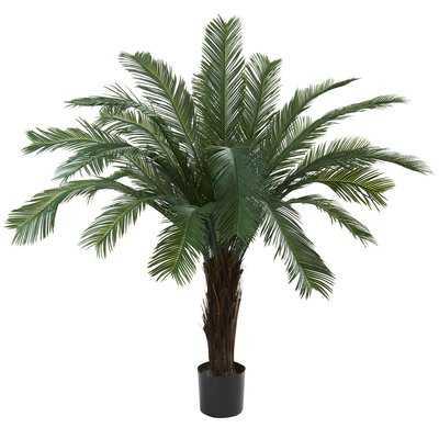 Cycas Palm Tree in Pot - Wayfair