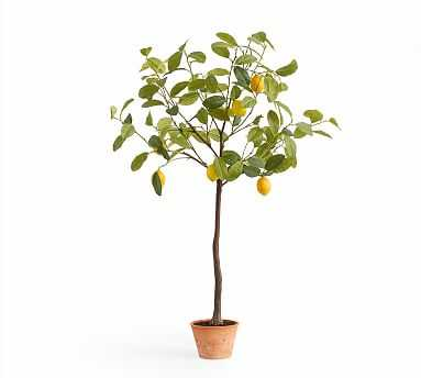 Faux Potted Lemon Tree - Large - Pottery Barn