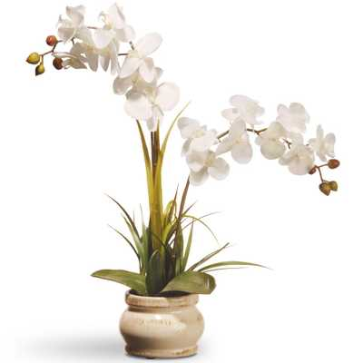 24 in. Cream Colored Orchid in Ceramic Pot, White - Home Depot