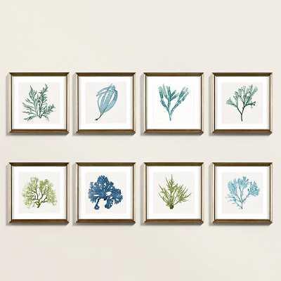 Ballard Designs Petite Coastal Seaweed Art Print V - Ballard Designs