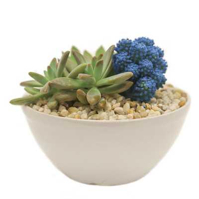 Blue Desert Gems Garden in 6 in. Gloss Ceramic Bowl - Home Depot