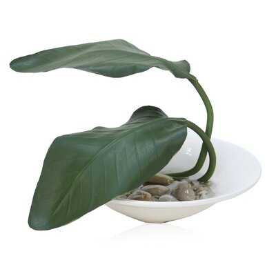 Bird of Paradise Banana Leaf Plant in Decorative Vase - Wayfair