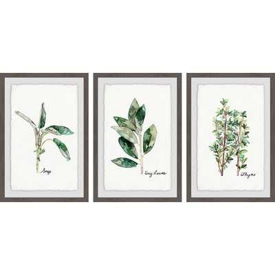 'Herb Trio Triptych' 3 Piece Framed Watercolor Painting Print Set - Birch Lane