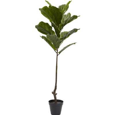 Fiddle Leaf Tree in Pot - Wayfair