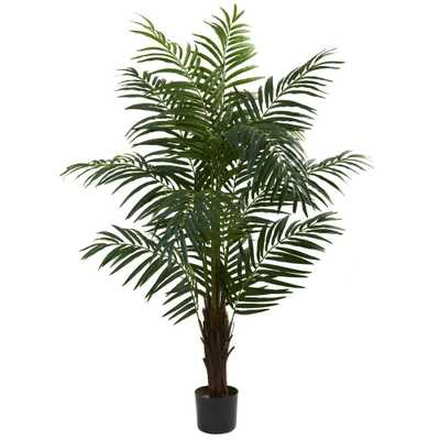 5 ft. Areca Palm Tree - Home Depot