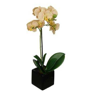 Artificial Baby Orchid Centerpiece in Pot - Birch Lane
