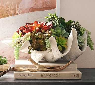 Faux Clam Succulent, Large - Pottery Barn