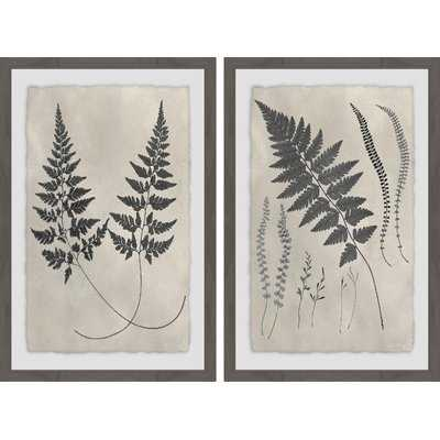 'Vintage Fern Study Diptych' 2 Piece Framed Graphic Art Print Set - Wayfair