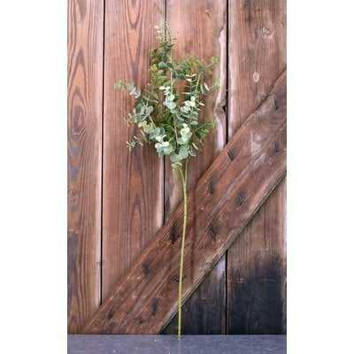 Eucalyptus Plant (Set of 12) - Wayfair