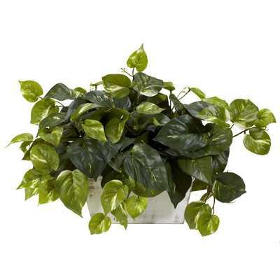 Pothos Desk Top Plant with Planter - Wayfair