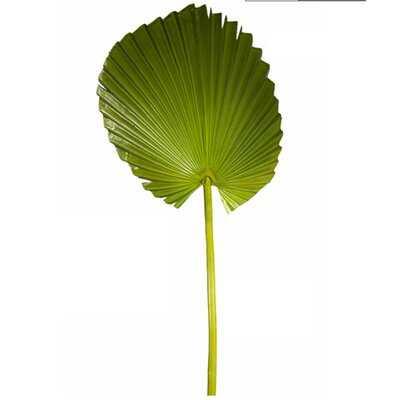 Green Fan Palm Leaf - Wayfair