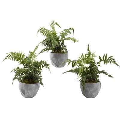 Leather Leaf Fern Plant in Cement Planter - Wayfair
