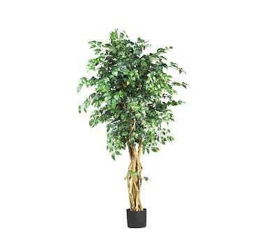 Faux Potted Palace Style Ficus Tree, 5' - Pottery Barn